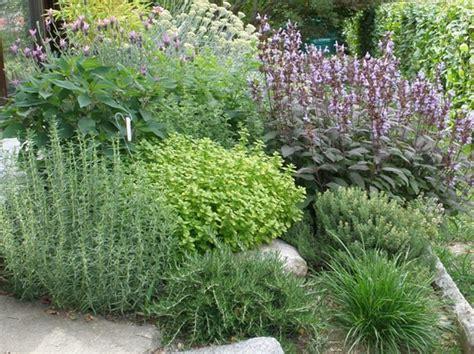 piante aromatiche in giardino aromatiche inorto guida all orto fai da te istruzioni