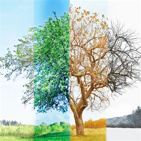 tree seasons come seasons 4 seasons of the year tree www pixshark com images galleries with a bite