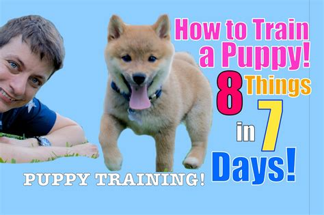 how to make your puppy stop biting how to your puppy 8 things in 7 days stop puppy biting come stay