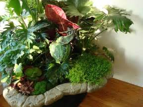 plants indoors indoor plants simple and beautiful garden park