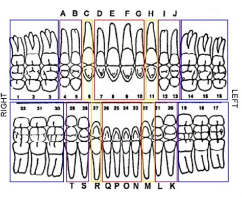 tooth charting diagram dental chart