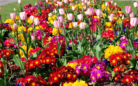 Flower Garden Wallpaper 1205138 Images Of Flowers Garden