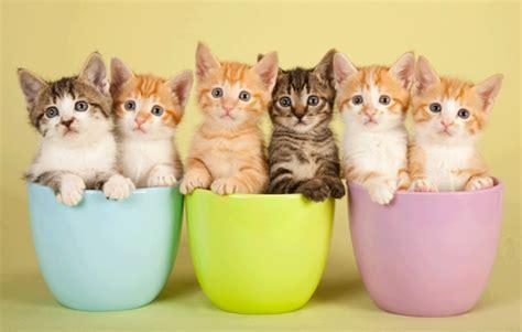 fotos animales bebes tiernos imagenes de gatos y perros tiernos y graciosos animales hoy