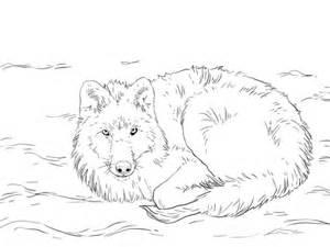 coloriage loup arctique couch 233 dans la neige