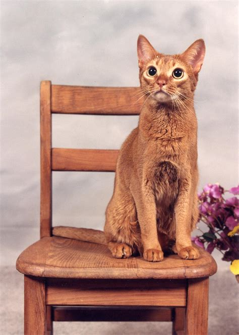 Cat On The Chair by Cats