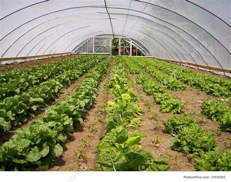 image  greenhouse vegetable garden lettuce