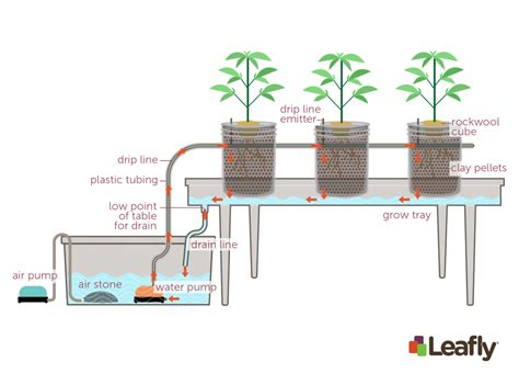 Hydrohobby For All Your Hydroponics Gear by How To Use Hydroponic Growing Systems For Marijuana Leafly