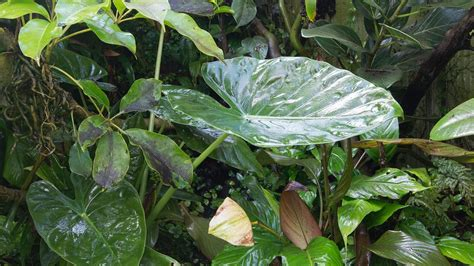 growth leaves speed  photosynthesis   amazon