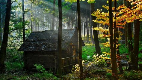forest house top 10 world s most beautiful forest houses highly
