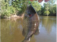 Bream fishing Ephesians 1:13