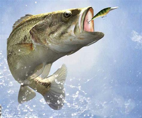 pictures of fishing bass fishing fish fishing bass fishing