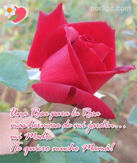 te regalo una rosa la mas hermosa la mas bella de todas una rosa para la rosa m 225 s hermosa de mi jard 237 n mi madre