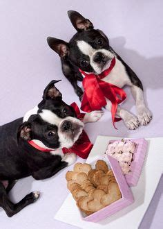 is cinnamon ok for dogs 1000 images about and more on valentines day velvet