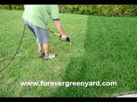 spray painting grass green jacksonville lawn painting forever green grass