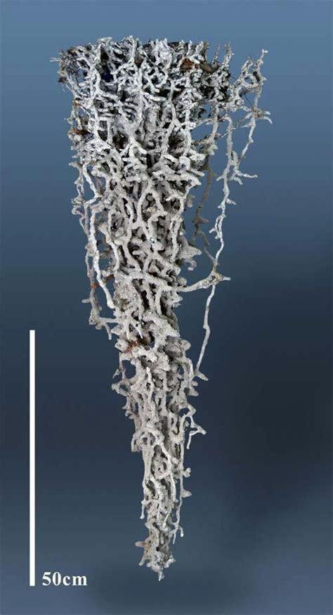 Gradient Nest aluminum mold of a plain ant hill neat ants