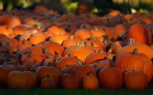 wallpapers pumpkin wallpapers