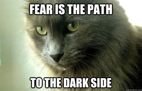 Fear Meme - fear is the path to the dark side yoda cat quickmeme