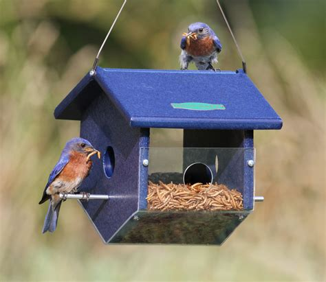 mealworm feeders for bluebirds plans wiring diagrams