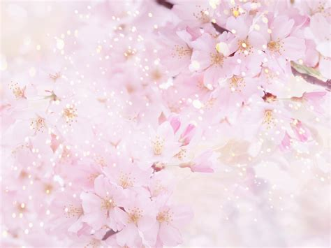 Flower Soft Hp soft flower background wallpapers the musaka wallpapers