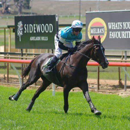 south australian jumps racing – promoting steeplechase and