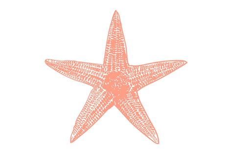 starfish clip vector starfish illustration illustrations creative market