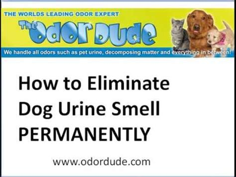 smoke smell out of car how to permanently remove smoke
