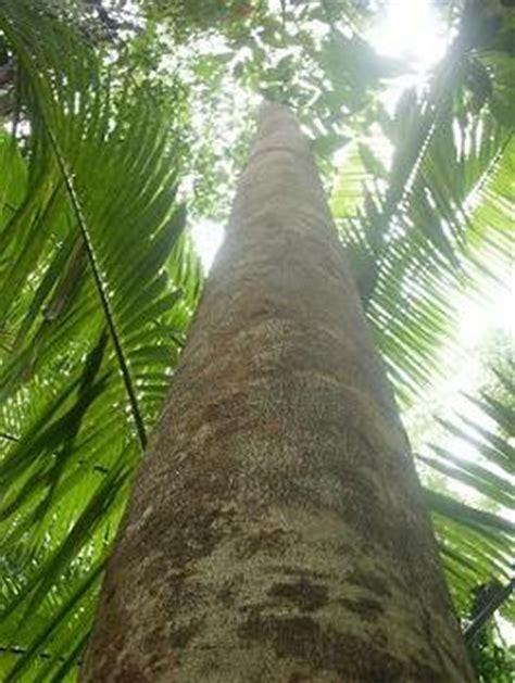 gambar pohon pohon foto pohon gambar tumbuhan