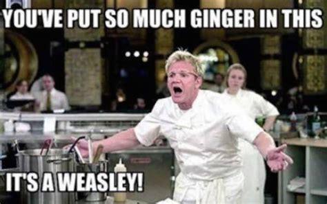 Gordon Ramsey Memes - gordon ramsay s insults are so sharp they cut like a knife