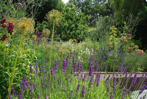 garden design oxshott lisa cox garden designs blog verbena bonariensis lisa cox garden designs blog