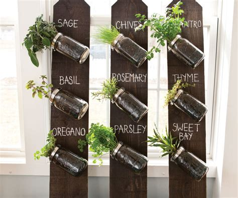 herbs on wall wall herb garden gardening guide