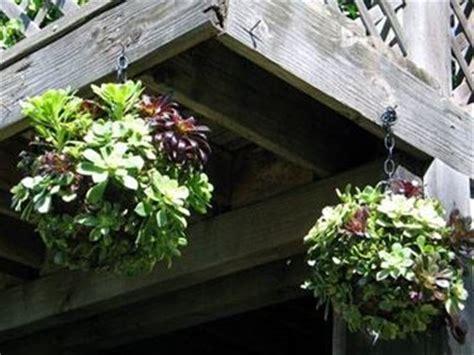 piante da davanzale piante grasse da balcone le piante grasse piante
