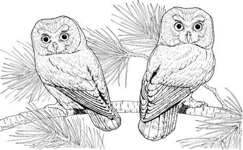 coloring pages for adults difficult owls birthday owl coloring pages printable