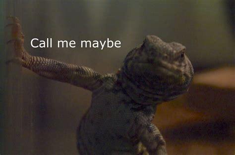 Lizard Meme - lounge lizard call me maybe know your meme