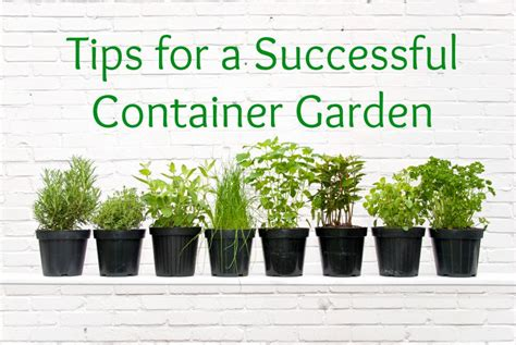 container gardening for beginners container gardens offer scalable gardening for beginners