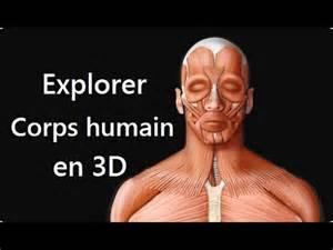 3d le explorer le corps humain en 3d avec maps