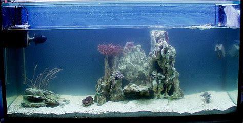 Folie Aquarium Kleben by Meerwasser Homepage Mit Aqua Bilderbuch