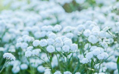 fiori bianchi matrimonio fiori bianchi classificazione e variet 224 per il giardino