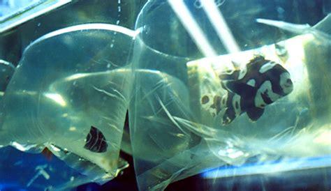 los peces de la recorrido los peces de la magdalena mixhuca chilango