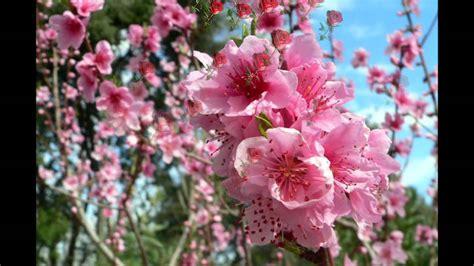 Fleurs De Printemps by Les Belles Fleurs De Printemps