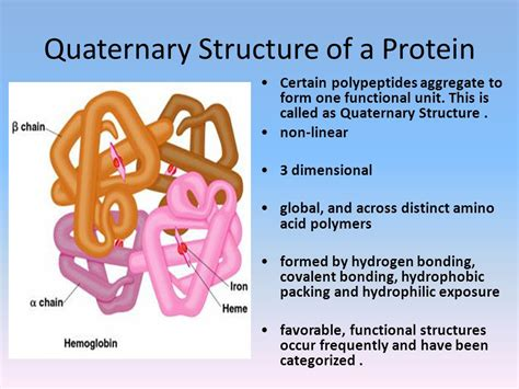 protein quaternary structure bonds amino acid and protein chemistry ppt