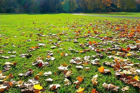 fall lawn care tips quiet corner