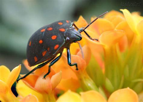 imagenes reflexivas de cumpleaños di 225 rio de uma sementeira insetos ben 233 ficos para suas plantas