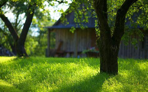 Backyard Gardener by Garden Green Grass Images Hd Desktop Wallpapers 4k Hd