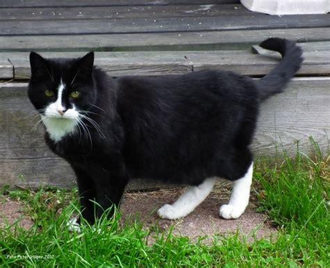 Black Cat T L Ld 86 Cm black cat free stock photos in jpeg jpg 1920x1567 format for free 694 84kb