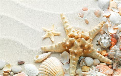 seashells  starfish   beach hd wallpaper