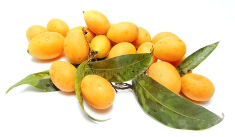 Buah Plum buah kundang mango plum mini mango stock image image 36250101