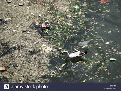 Thames River London Ontario Pollution | pollution in the river thames london uk stock photo