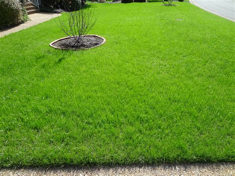 winter lawn care uncategorized archives new lawn care tips