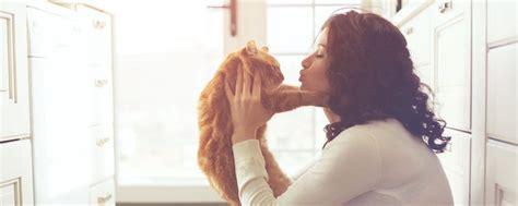 los gatos vuelven a casa los gatos vuelven a casa por otra cosa distinta a la