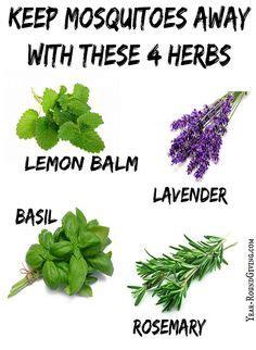 one ash plantation homestead perennial herb chart i have perennial herbs chart perennials herbs and plants